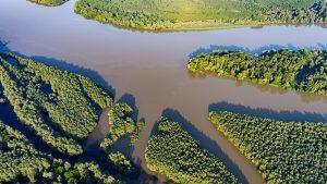 rijeka, dunav, poplavna šuma, kopački rit,