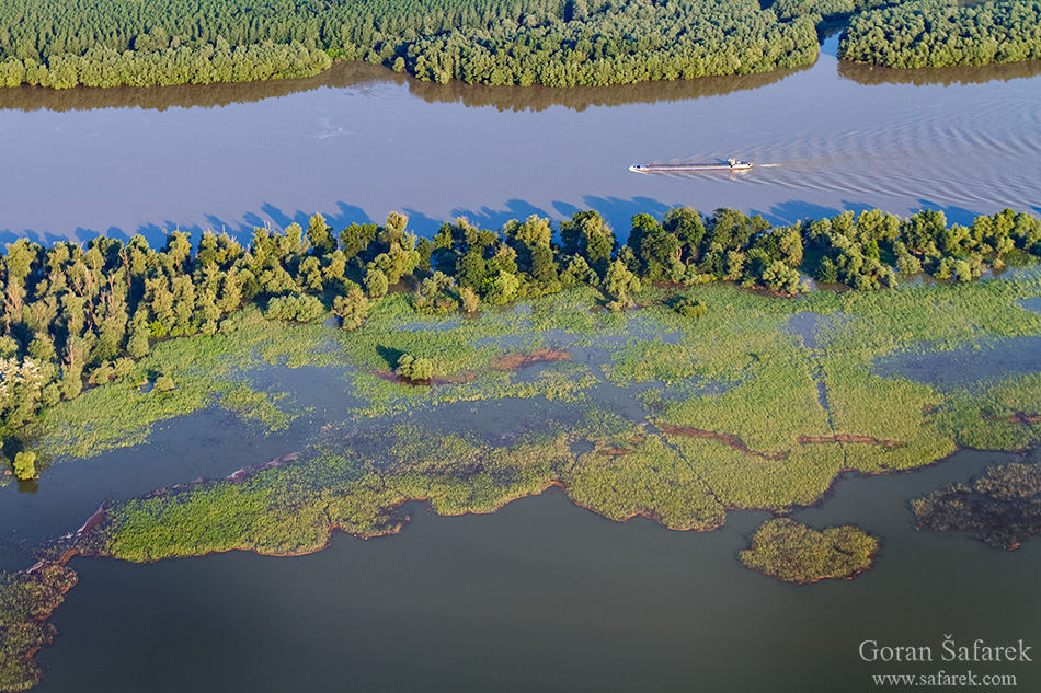 rijeka, dunav, poplavna šuma, kopački rit, poplava, plovidba, brod